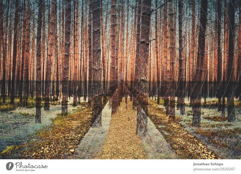 Mehrfachbelichtung Wald und Weg Umwelt Natur Landschaft Urelemente Wiese ästhetisch Vorfreude Baum Nadelwald kahl Doppelbelichtung Experiment Wege & Pfade