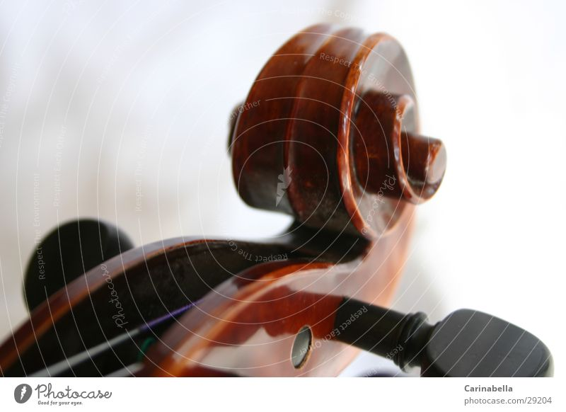 Geige III Musik Holz braun Dinge Schnecke Geige Musikinstrument Saite Resonanz Resonanzkörper