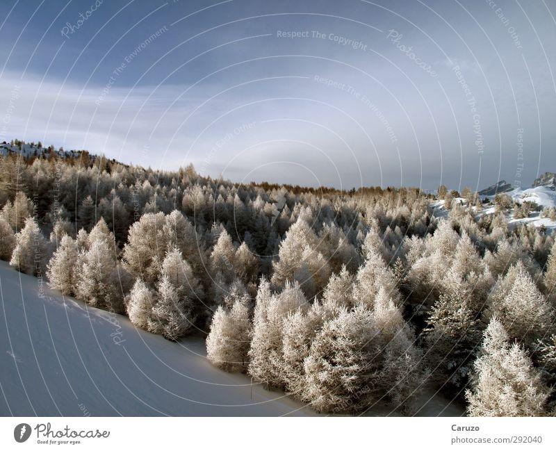 I'm Up In The Woods Himmel Natur blau weiß Pflanze Baum Einsamkeit Landschaft ruhig Winter Wald kalt Umwelt Berge u. Gebirge Schnee Holz