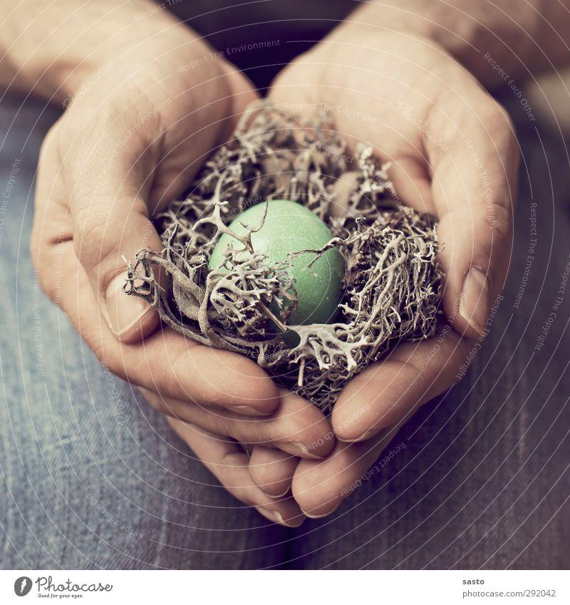 Protection Ei Ostern maskulin Mann Erwachsene Vater Hand Finger blau braun grün Warmherzigkeit Verantwortung Geborgenheit Nest Nestwärme Zweig Schutz Fürsorge