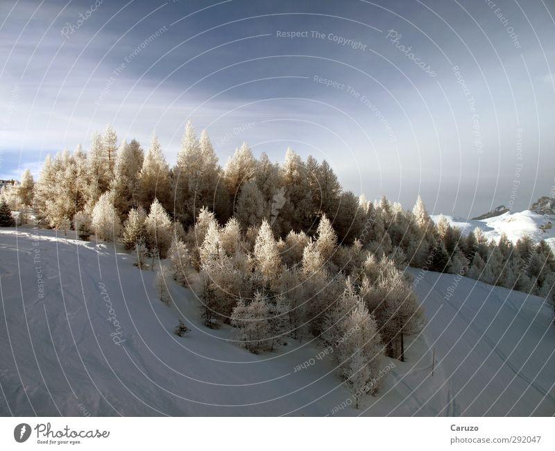 Wuz Winter Schnee Berge u. Gebirge Umwelt Natur Landschaft Luft Himmel Eis Frost Baum Wald Alpen beobachten kalt blau braun weiß ruhig Einsamkeit Abenteuer