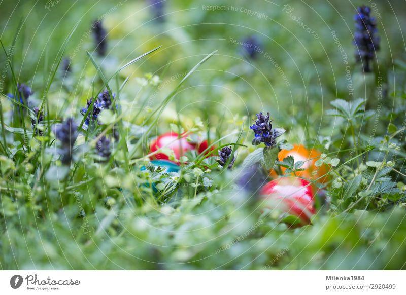 versteckte Ostereier Garten Ostern Natur Pflanze Gras Wiese Freude Frühlingsgefühle Ostereiersuche verstecken Hühnerei Farbfoto Außenaufnahme Nahaufnahme