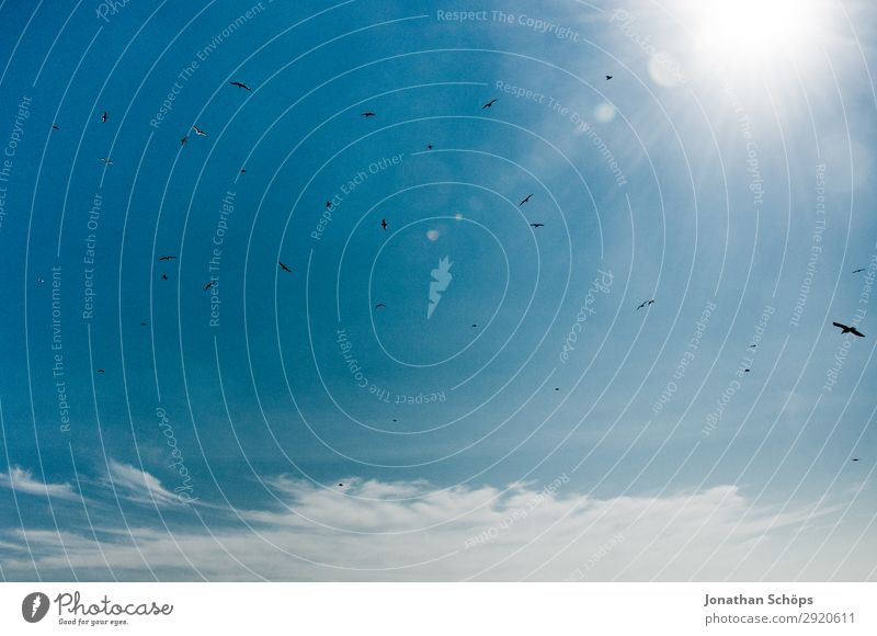Möwenschwarm am blauen Himmel Ferien & Urlaub & Reisen Tourismus Sommer Meer wandern Natur Landschaft nur Himmel Felsen Küste Tier Vogel Schwarm weiß England