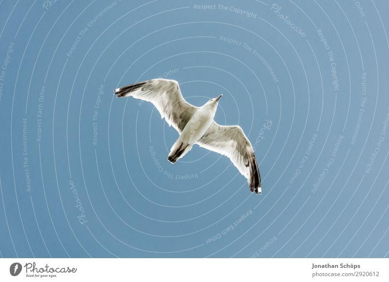 Möwe fliegt am blauen Himmel Ferien & Urlaub & Reisen Natur Sommer weiß Landschaft Meer Erholung Tier Ferne Küste Tourismus Freiheit Vogel Felsen fliegen