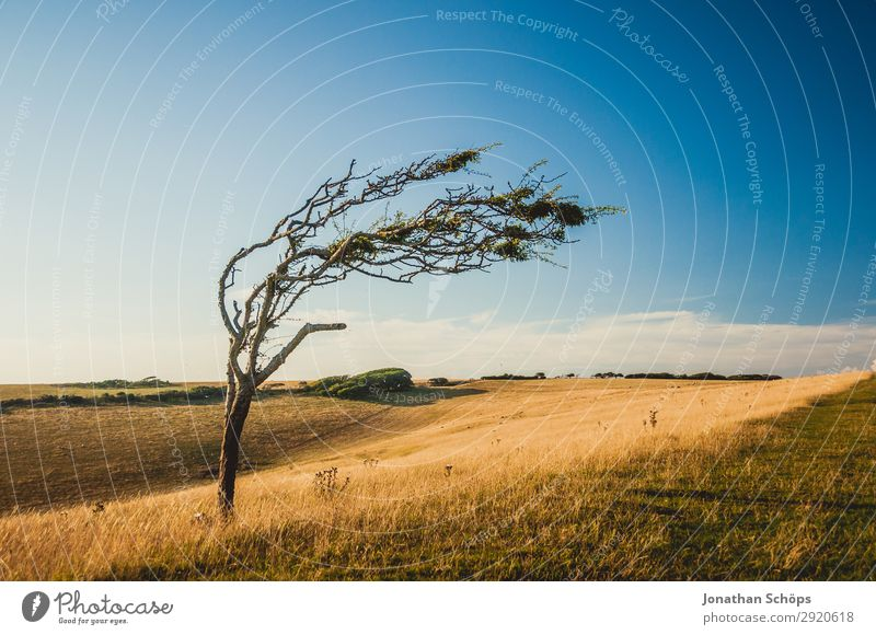 kahler schiefer Baum auf Feld in Südengland Umwelt Natur Landschaft Pflanze Urelemente Wasser Himmel Klima Klimawandel Wetter Schönes Wetter Wind Küste