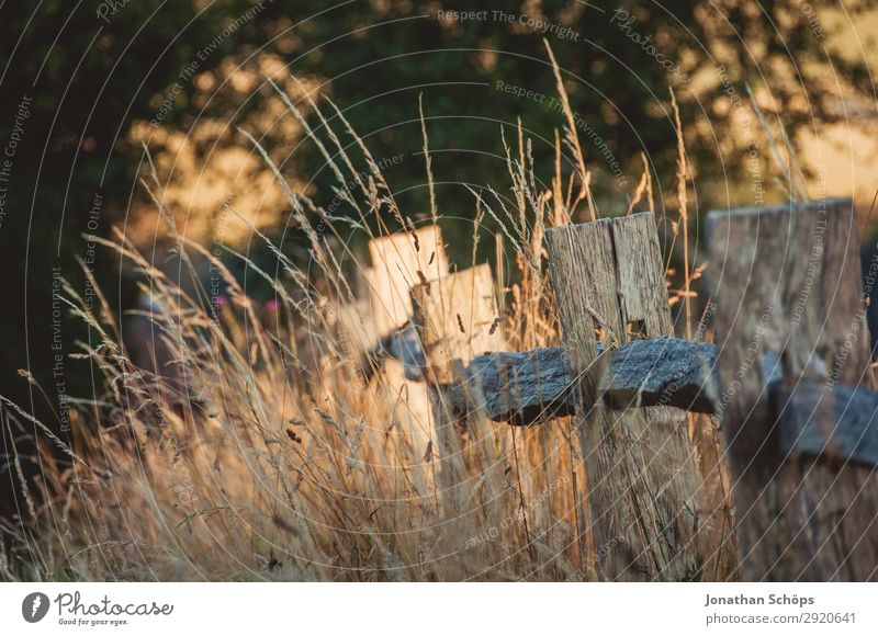 Zaun am Feldrand in der Abendsonne Umwelt Natur Landschaft Pflanze Schönes Wetter Wiese braun England Grenze Großbritannien Pfosten Bauernhof Warme Farbe