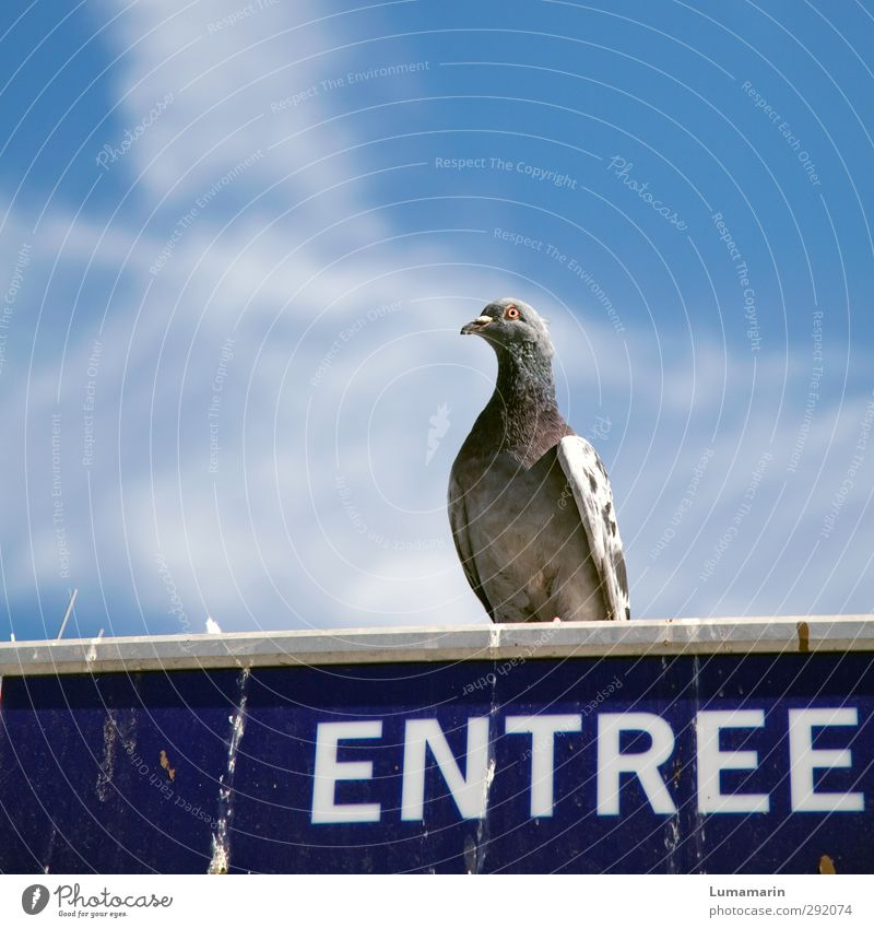 Concierge Umwelt Himmel Wolken Tier Wildtier Vogel Taube 1 Zeichen Schriftzeichen Schilder & Markierungen sitzen dreckig oben Stadt Eingang Pförtner Wachsamkeit