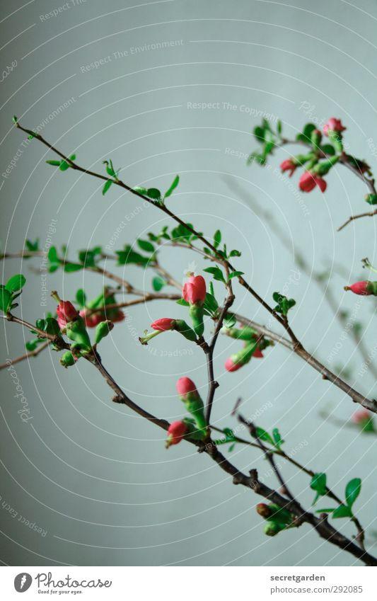 it's a rainy day. grün schön Pflanze Blatt dunkel Frühling grau Blüte rosa Wohnung frisch Häusliches Leben Blühend Duft Vorfreude Grünpflanze