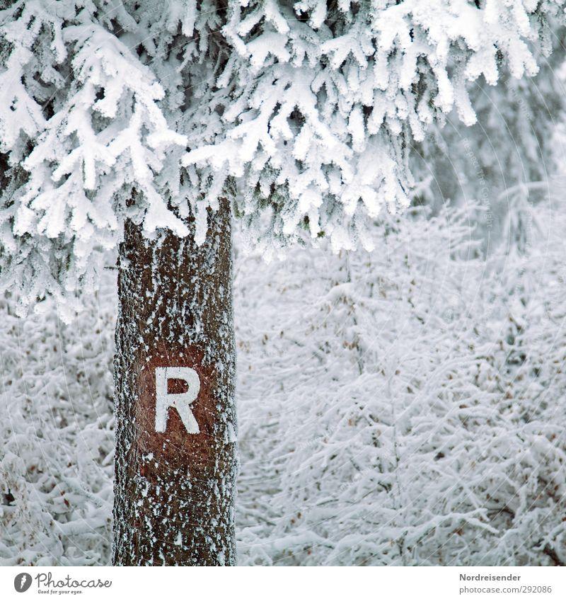Letzten Sonntag.... Natur weiß Baum Tier Winter ruhig Wald kalt Schnee Wege & Pfade Holz braun Eis Wetter Klima Schilder & Markierungen