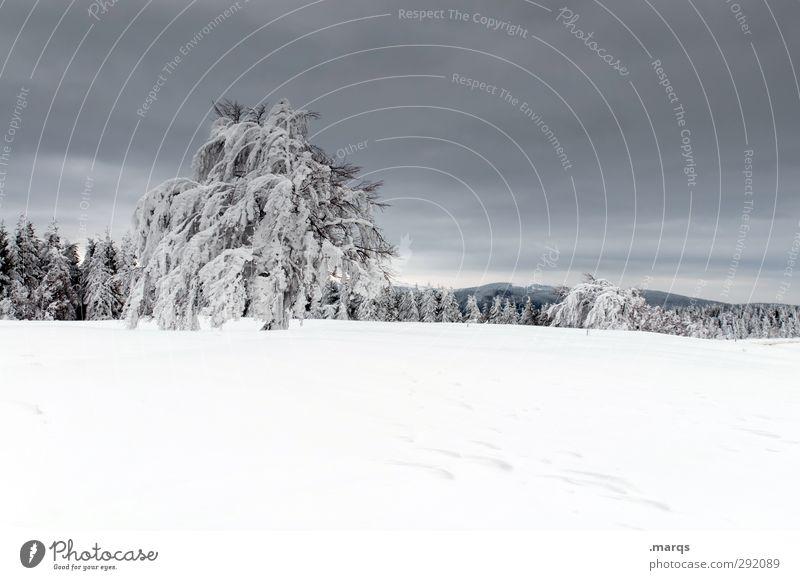 Eis am Stiel Ferien & Urlaub & Reisen Ausflug Winterurlaub Berge u. Gebirge Umwelt Natur Landschaft Klima Unwetter Frost Schnee Baum Schauinsland kalt schön