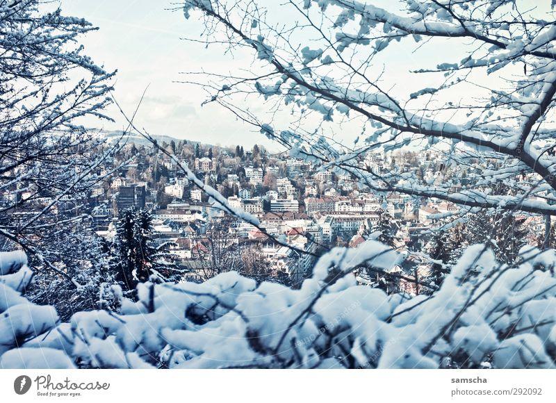 winterlich Natur Stadt weiß Pflanze Winter Landschaft Haus Umwelt kalt Schnee Gebäude Eis Stadtleben Häusliches Leben Sträucher Frost