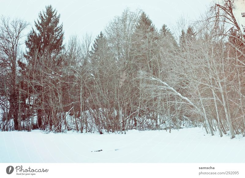 Winterwald Natur Pflanze Baum Winter Landschaft Wald Umwelt dunkel kalt Schnee Holz natürlich wild Landwirtschaft Schneelandschaft Forstwirtschaft