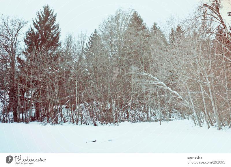 Winterwald Natur Pflanze Baum Landschaft Wald Umwelt dunkel kalt Schnee Holz natürlich wild Landwirtschaft Schneelandschaft Forstwirtschaft