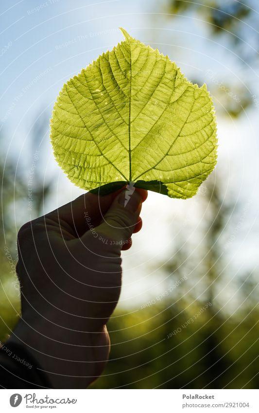#S# Green II Umwelt Natur Pflanze Klima Klimawandel ästhetisch Blatt Blattgrün Blattadern Blattfaser Buche Baum stoppen Umweltschutz Hilfsbereitschaft Leben
