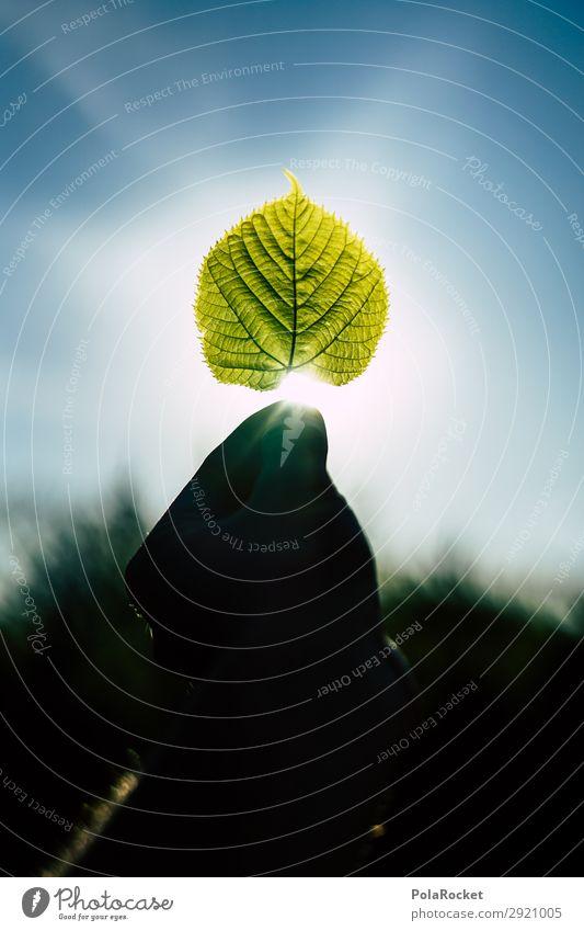 #S# Green III Umwelt Natur Landschaft Klima Klimawandel ästhetisch Blatt Blattgrün Blattadern Strukturen & Formen Wunder Umweltschutz Sonnenstrahlen einzigartig