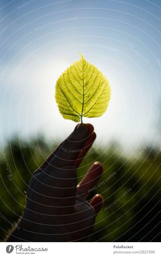 #S# Green Umwelt Natur Pflanze Klima Leben Blatt Blattgrün Blattadern Blattfaser Naturschutzgebiet Naturliebe Umweltschutz Hoffnung Strukturen & Formen