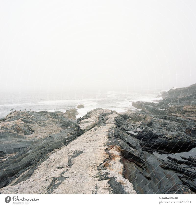 Salz in der Lunge. Natur Wasser Meer Umwelt kalt Küste Felsen Stimmung außergewöhnlich Wellen Erde authentisch trist Urelemente bedrohlich Riff
