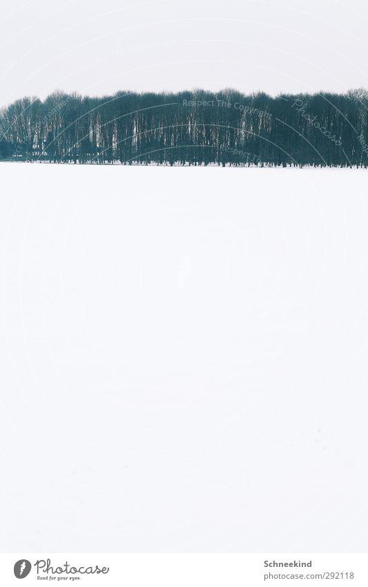 Winter Umwelt Natur Landschaft Urelemente Himmel Klima Eis Frost Schnee Schneefall Baum Sträucher Wildpflanze Feld Wald atmen beobachten glänzend ästhetisch