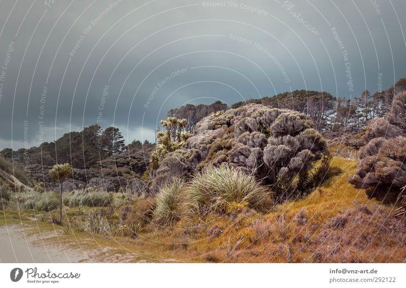 Untergang Himmel Natur blau Pflanze Baum Tier Wolken Landschaft Wald Umwelt dunkel Gras grau gold Erde Sträucher