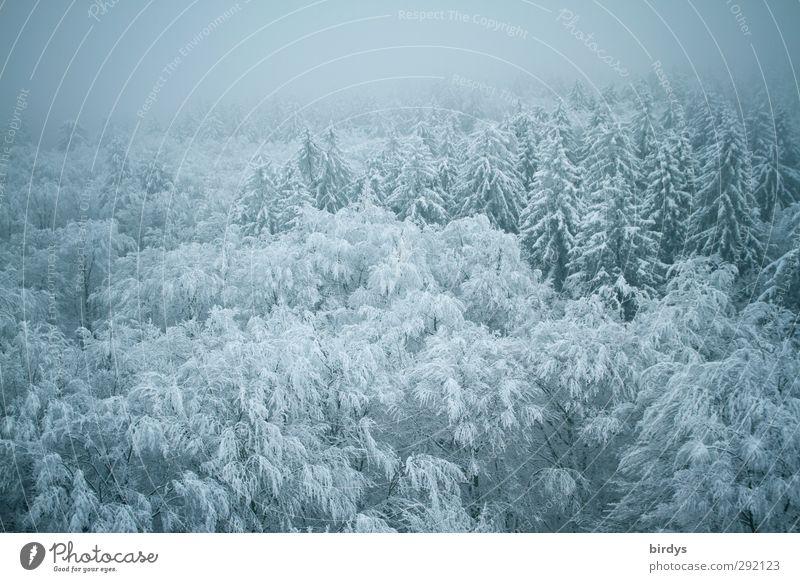Winterkleid Natur Nebel Eis Frost Schnee Wald authentisch Unendlichkeit kalt schön blau ruhig Frieden Idylle Klima Perspektive Umwelt Wandel & Veränderung