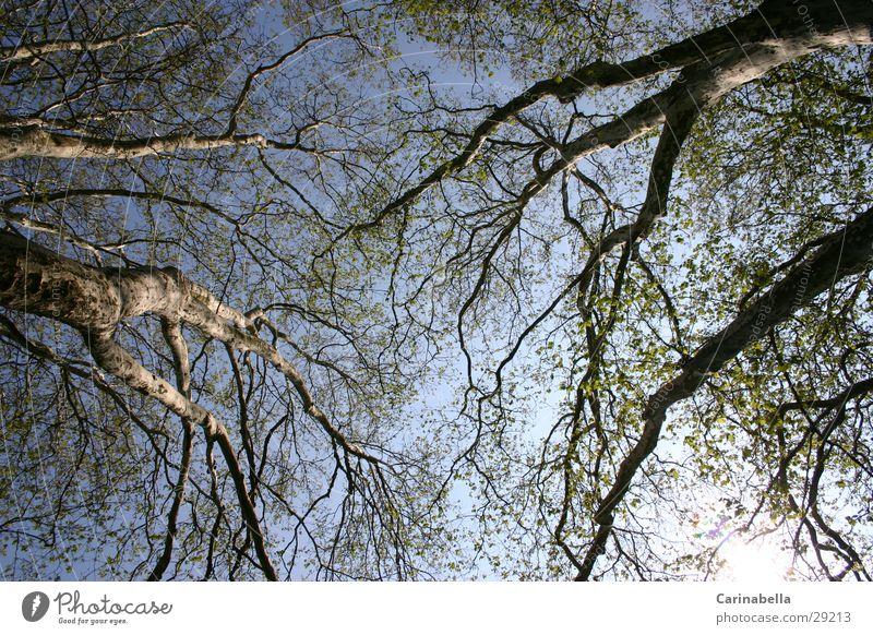 Baum II Himmel Baum Holz Ast Baumstamm Baumkrone