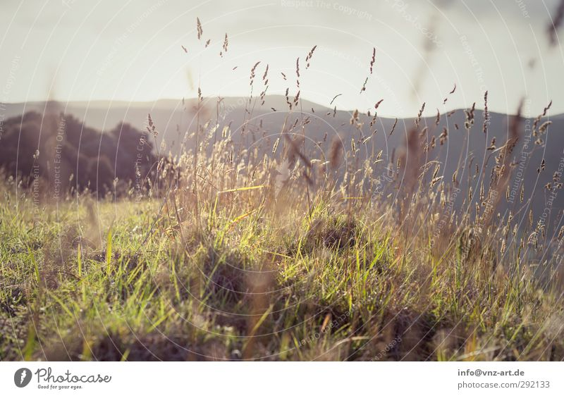 Sunset Umwelt Natur Landschaft Pflanze Tier Erde Sonne Sonnenaufgang Sonnenuntergang Sonnenlicht Klima Wetter Schönes Wetter Gras Sträucher Hügel