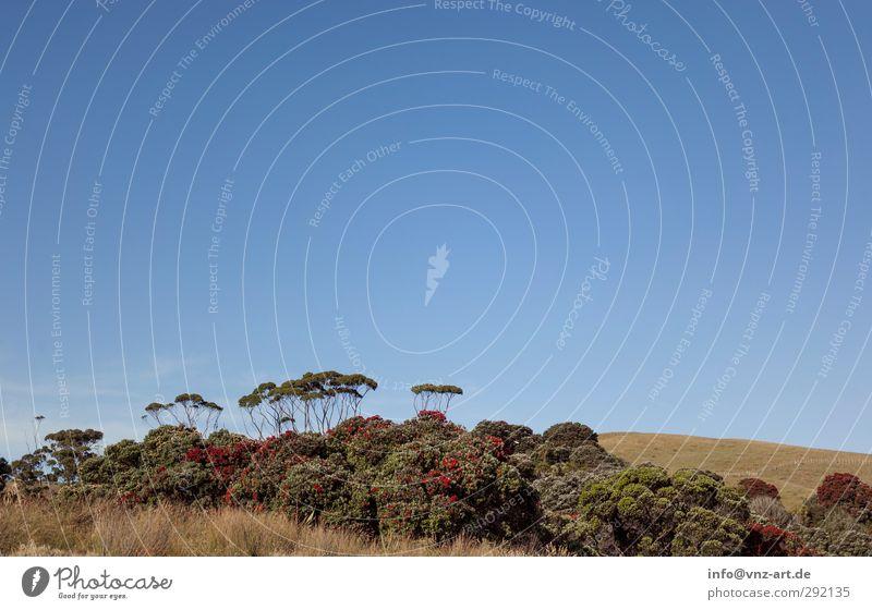 Vermischt Umwelt Natur Landschaft Pflanze Tier Erde Luft Himmel Wolkenloser Himmel Sommer Baum Blume Gras Sträucher Wiese Feld Wald Urwald exotisch Ferne