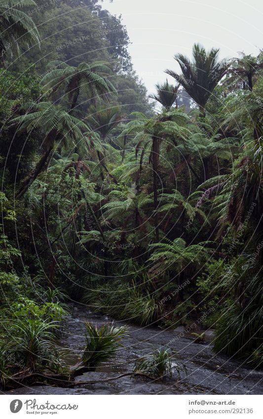 Waldig Umwelt Natur Landschaft Pflanze Tier Urelemente Erde Luft Wasser Wassertropfen Himmel Wolkenloser Himmel Klima Wetter schlechtes Wetter Regen Baum Blume