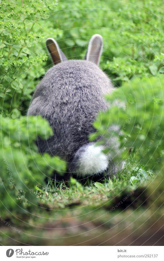 Bodo baggert noch... Pflanze Tier Umwelt Wiese Glück Feste & Feiern Garten Feld Wildtier frisch niedlich weich Ostern Fell Haustier Fressen