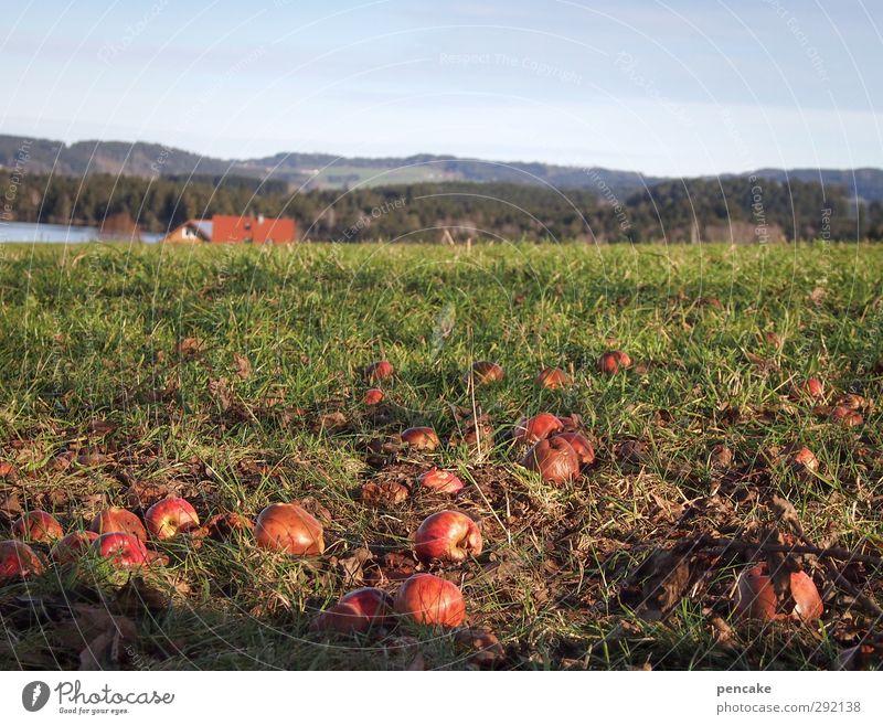 aufgetau[ch]t Umwelt Natur Landschaft Frühling Klima Klimawandel Baum Gras Nutzpflanze Berge u. Gebirge Allgäu Seeufer Weide Fröhlichkeit Zufriedenheit