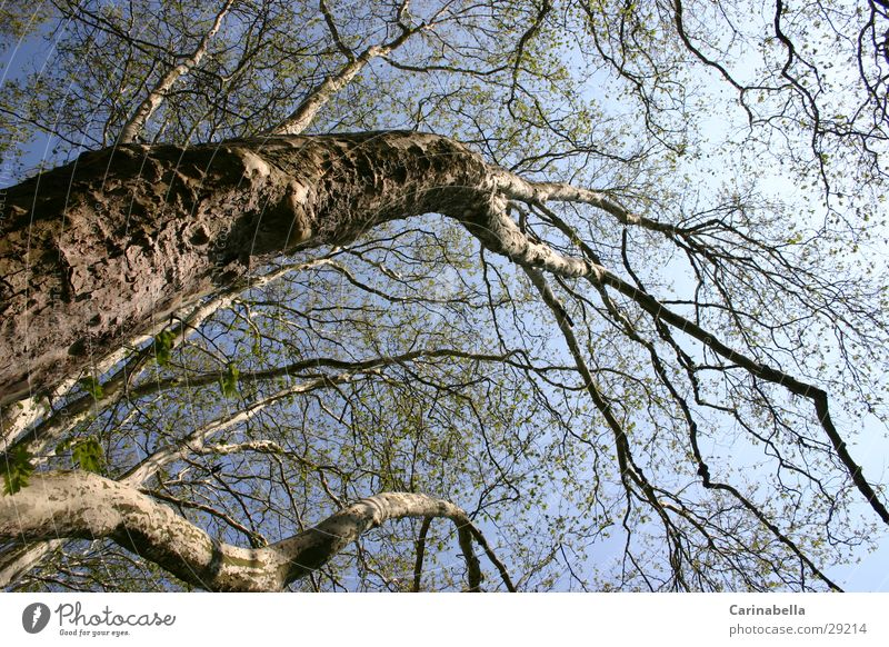 Baum I Himmel Holz Ast Baumstamm Baumkrone
