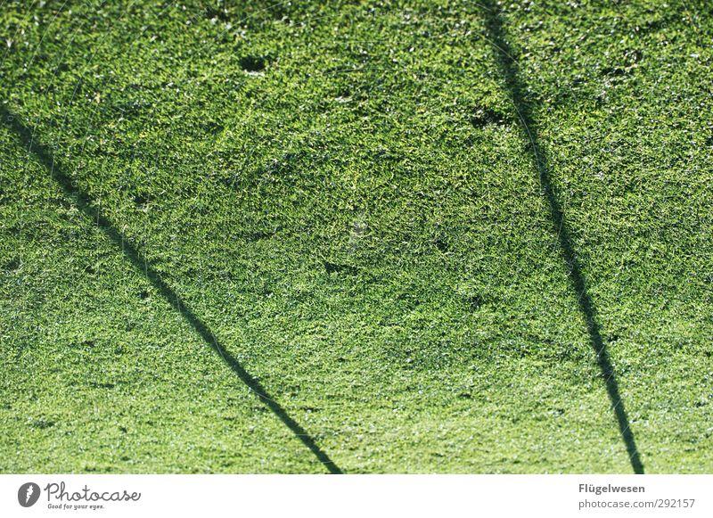 Fußballverrückt Sport Spielen Freizeit & Hobby Fitness Leidenschaft Sport-Training Publikum Sportveranstaltung Sportler Fan Tatkraft Stadion Fußballplatz