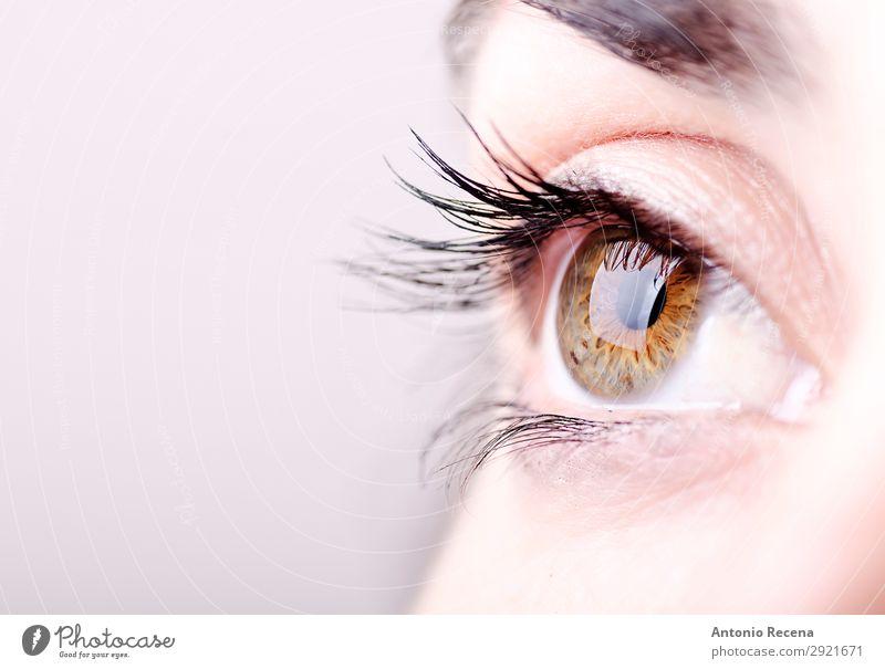 Nahaufnahme Auge Mensch Frau Erwachsene brünett hell lateinamerikanisch Menschen Regenbogenhaut Pupille Wimpern Augenbraue Sehvermögen Optik Licht