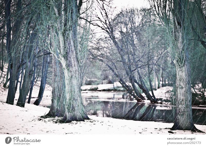 beware of the monsters Landschaft Winter Schnee Baum Park Flussufer Aggression außergewöhnlich dunkel fantastisch gruselig kalt schwarz weiß träumen Traurigkeit