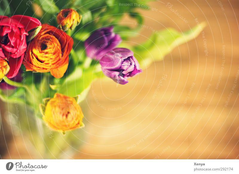 Frühlingsboten Pflanze Tulpe Blumenstrauß Blühend ästhetisch Freundlichkeit Wärme gelb grün violett orange rot Frühlingsgefühle Romantik Blumenvase