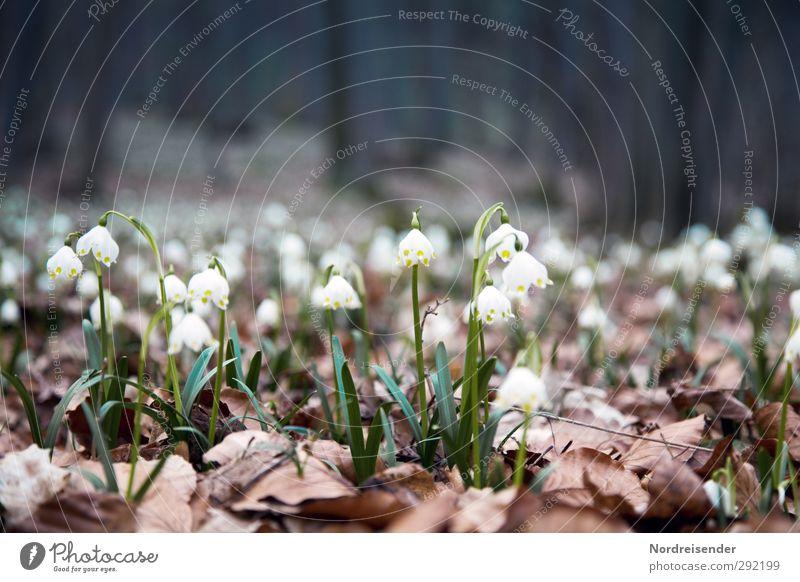 Januar ist durch.... Natur Pflanze Blume ruhig Landschaft Erholung Wald Leben Frühling Wachstum leuchten frisch Freundlichkeit Blühend rein Duft