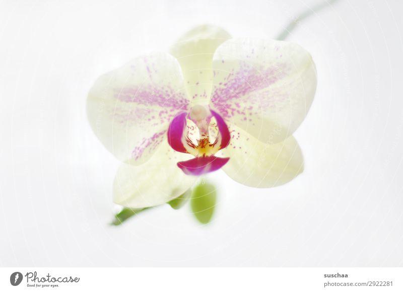 durch die blume Blume Orchidee Pflanze Natur schön Wellness Gesundheit hell Seele Meditation Spa Romantik zart harmonisch exotisch Hintergrund neutral