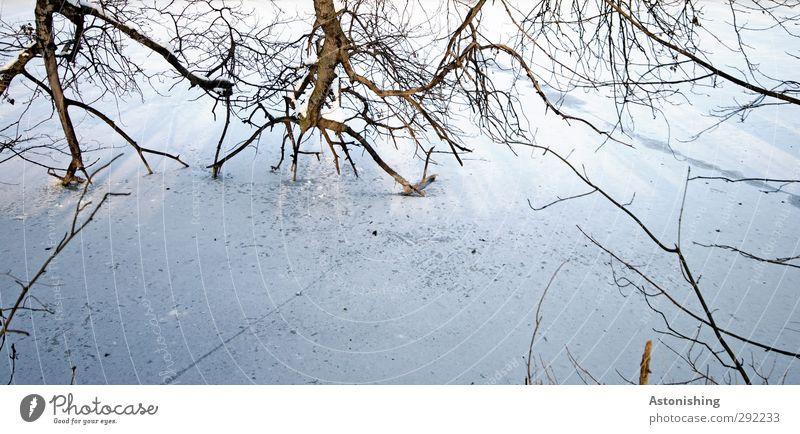 ins Eis Umwelt Natur Landschaft Pflanze Winter Wetter Frost Schnee Baum Park Wald Flussufer Holz kalt Ast Geäst Zweig Schatten weiß Farbfoto Außenaufnahme