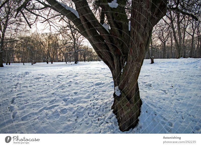 verzweigt Umwelt Natur Landschaft Pflanze Luft Himmel Horizont Sonne Winter Wetter Schönes Wetter Eis Frost Schnee Baum Park Wiese Wald Holz stehen blau braun