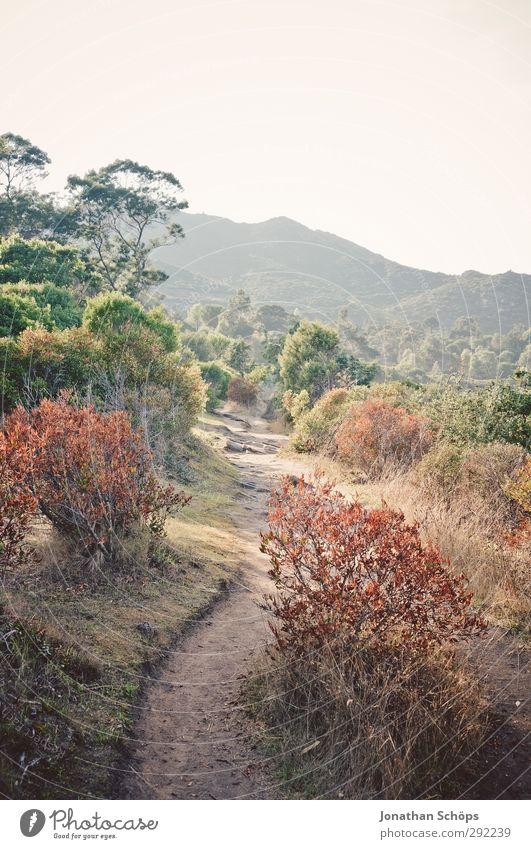 ...Korsika! Umwelt Natur Landschaft Pflanze Himmel Wolkenloser Himmel Sommer Schönes Wetter Sträucher Hügel Berge u. Gebirge Hoffnung Wege & Pfade Insel