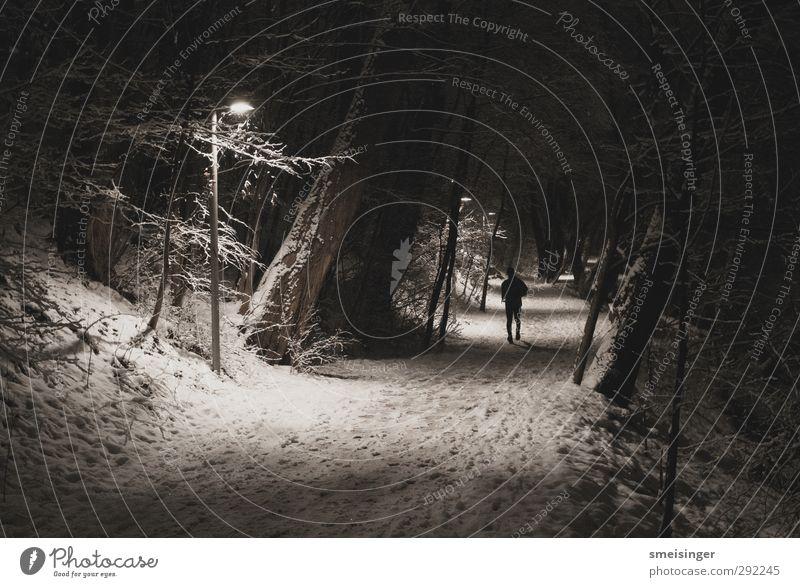Jogger im Schnee bei Nacht Mensch Natur weiß Baum Winter Erholung dunkel kalt Schnee Sport Park Freizeit & Hobby laufen authentisch Erfolg frei