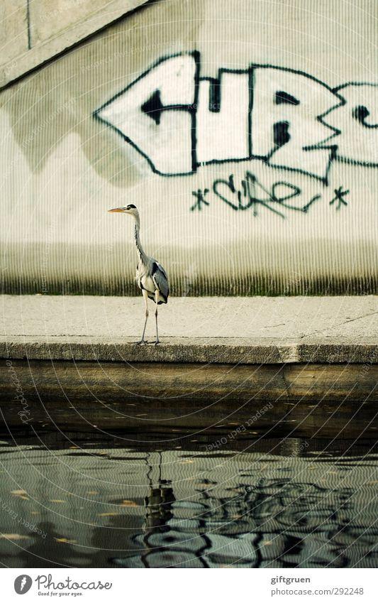 schmierfink Wasser Stadt Tier Graffiti Wand Mauer grau Stein Beine Vogel außergewöhnlich Wildtier stehen Stadtleben Schriftzeichen Feder