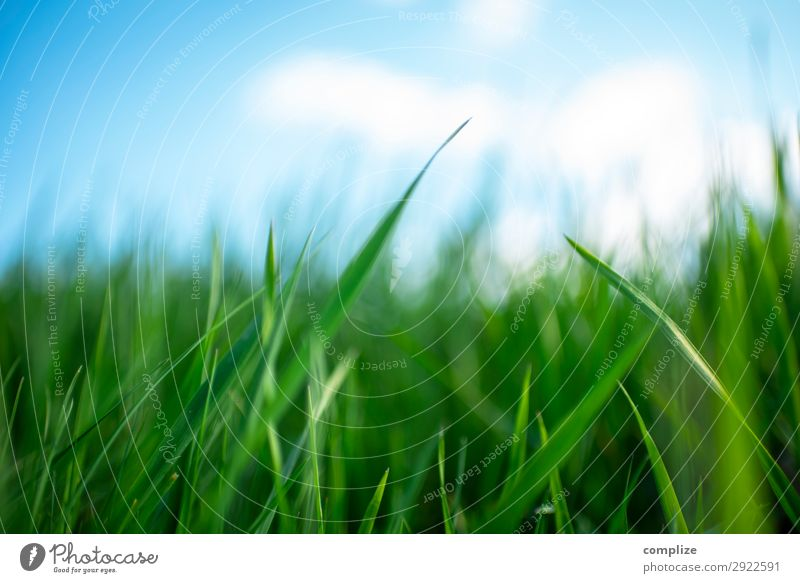 Saftige grüne Wiese blauer Himmel im Frühling Gesundheit Alternativmedizin Wellness Erholung Ferien & Urlaub & Reisen Sommer Umwelt Natur Landschaft Sonne Klima