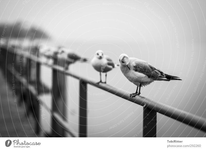 just another gull Fischerdorf Hafenstadt Stadtrand Menschenleer Tier Vogel Flügel Tiergruppe beobachten Erholung sitzen stehen warten elegant Unendlichkeit