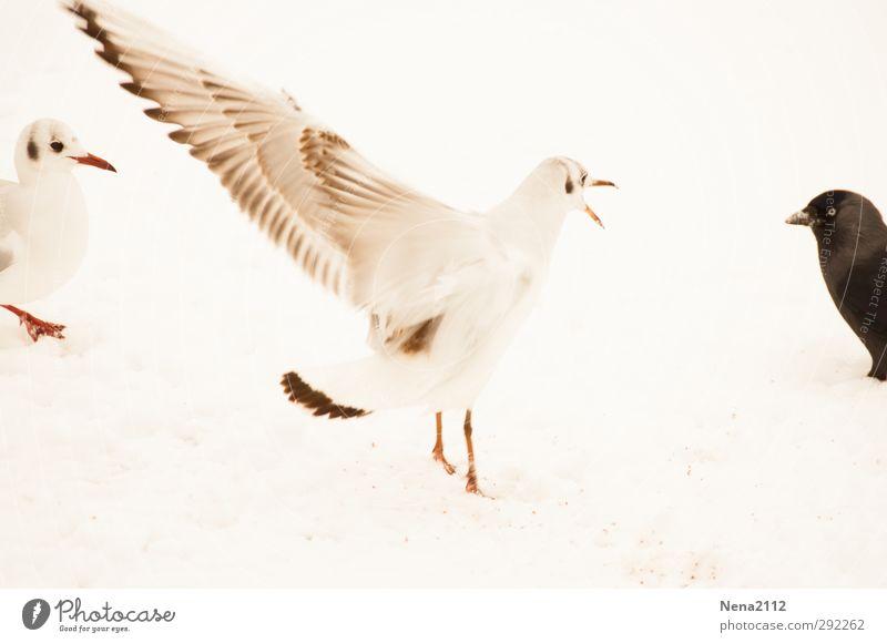 Black & White Natur weiß Tier Winter schwarz Umwelt Wiese Schnee Vogel Eis außergewöhnlich Erde Tierpaar Flügel Frost Tiergesicht
