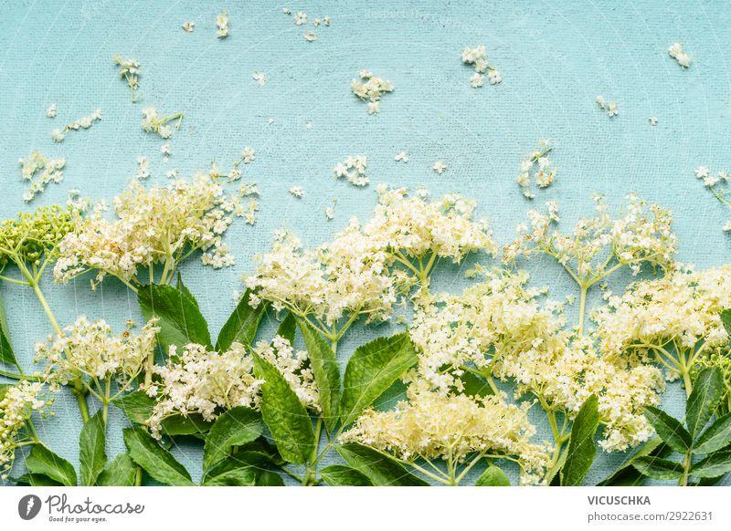 Holunderblüten auf hellblauem Hintergrund Natur Gesunde Ernährung Sommer Gesundheit Lebensmittel Hintergrundbild gelb Stil Design Blühend Kräuter & Gewürze