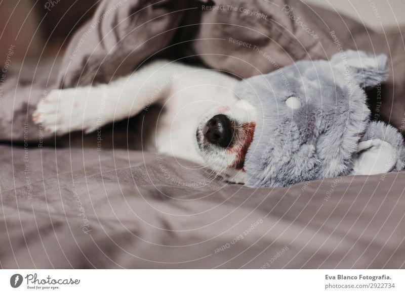 süßer kleiner Hund auf dem Bett liegend und mit Schlafmaske Lifestyle Erholung Sommer Häusliches Leben Wohnung Haus Schlafzimmer Tier Herbst Haustier 1 schlafen