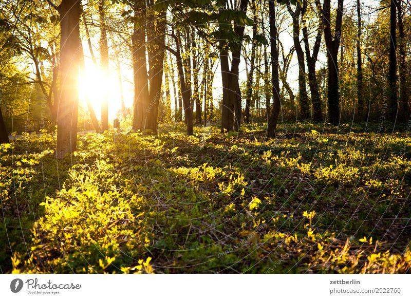 Sonnenuntergang am Insulaner Park Gegenlicht Ast Baum Blatt Erholung Ferien & Urlaub & Reisen Gras Himmel Himmel (Jenseits) Hintergrundbild Licht Menschenleer