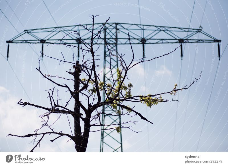 Ökostrom Natur Baum Umwelt Leben Frühling Energiewirtschaft Wachstum Zukunft ästhetisch Elektrizität planen bedrohlich Wandel & Veränderung Idee Beratung