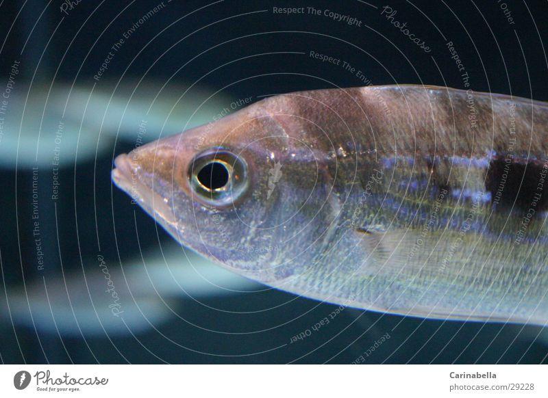 Fishit Wasser Fisch Aquarium